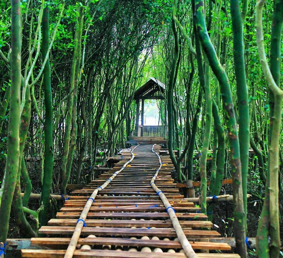 hutan mangrove congot